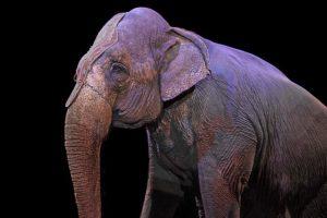 elephant-1412307_640